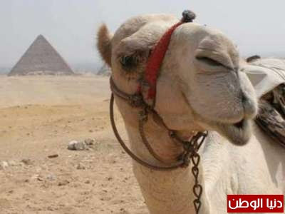حقائق غريبة عن الحيوانات بالصور والفيديو 3909783820.jpg