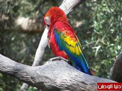 حقائق غريبة عن الحيوانات بالصور والفيديو 3909783822.jpg