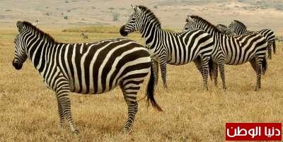 حقائق غريبة عن الحيوانات بالصور والفيديو 3909783823.jpg