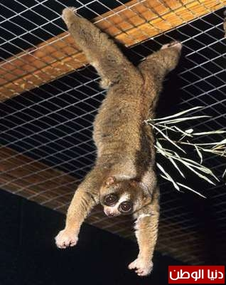 أغرب 10 حيوانات سامة بالصور 3909785439.jpg