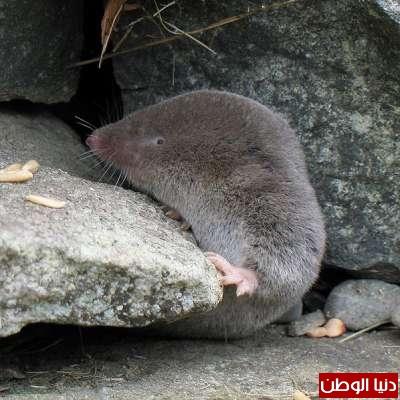 أغرب 10 حيوانات سامة بالصور 3909785445.jpg