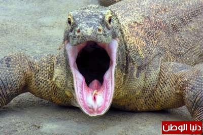أغرب 10 حيوانات سامة بالصور 3909785448.jpg