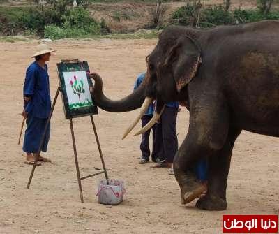 أذكى 10 حيوانات مدعم  بالصور والفيديو !