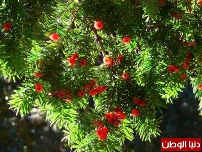 عشرة نباتات قاتلة وبالصور 3909785651