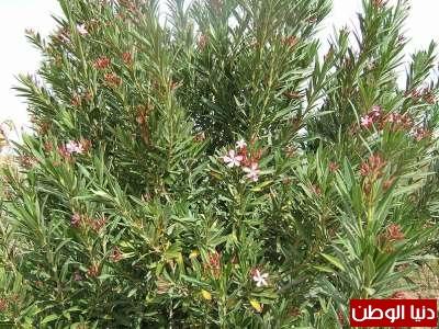 عشرة نباتات قاتلة وبالصور 3909785654