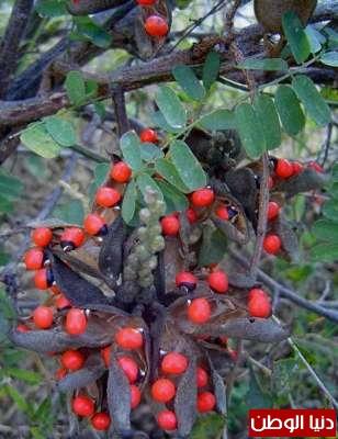 عشرة نباتات قاتلة وبالصور 3909785660