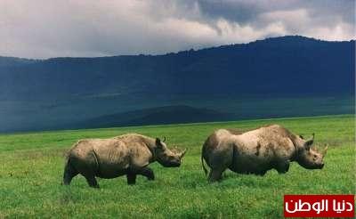 حيوانات مُهددة بالأنقراض بالصور 3909785961.jpg