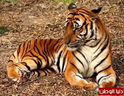 حيوانات مُهددة بالأنقراض بالصور 3909785962.jpg