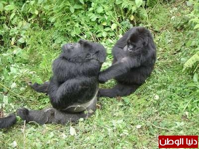حيوانات مُهددة بالأنقراض بالصور 3909785963.jpg