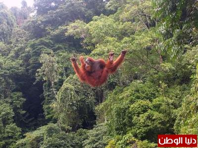 حيوانات مُهددة بالأنقراض بالصور 3909785964.jpg