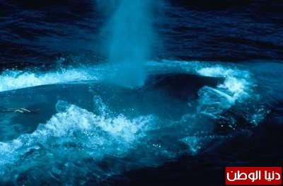 حيوانات مُهددة بالأنقراض بالصور 3909785965.jpg