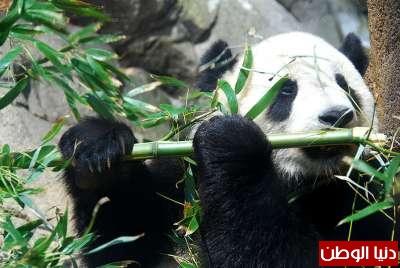 حيوانات مُهددة بالأنقراض بالصور 3909785966.jpg