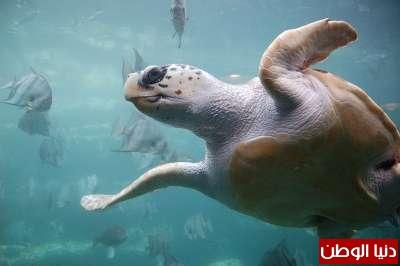 حيوانات مُهددة بالأنقراض بالصور 3909785967.jpg