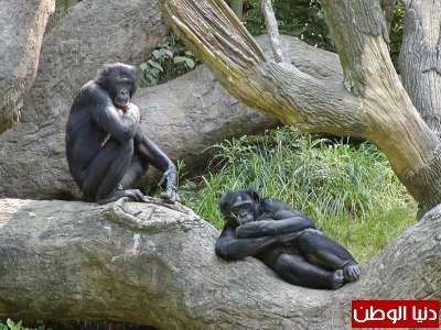 حيوانات مُهددة بالأنقراض بالصور 3909785968.jpg