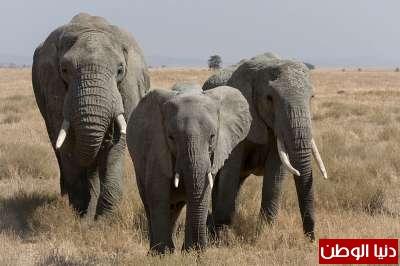 حيوانات مُهددة بالأنقراض بالصور 3909785969.jpg