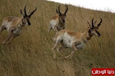 أسرع عشر مخلوقات على الأرض مدعم  بالصور والفيديو