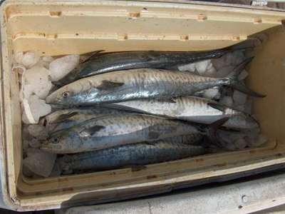 أنواع الأسماك بالصور 3909790657.jpg