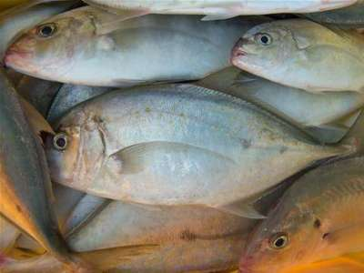 أنواع الأسماك بالصور 3909790658.jpg