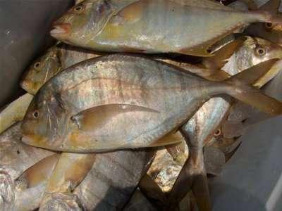أنواع الأسماك بالصور 3909790671.jpg