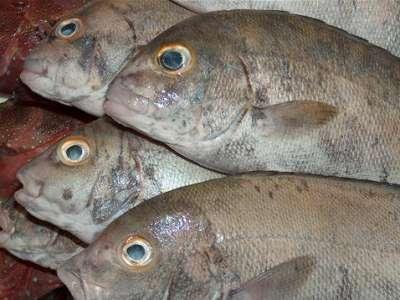 أنواع الأسماك بالصور 3909790673.jpg