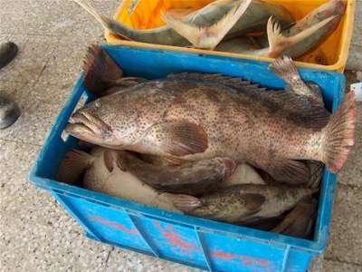 أنواع الأسماك بالصور 3909790674.jpg