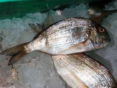 أنواع الأسماك بالصور 3909790679.jpg
