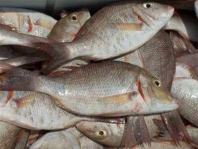 أنواع الأسماك بالصور 3909790685.jpg