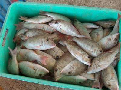 أنواع الأسماك بالصور 3909790688.jpg