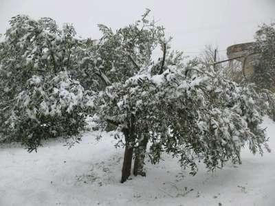 فلسطين تكتسي بالثوب الأبيض 3909792635.jpg