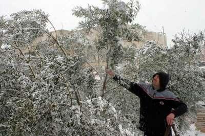 فلسطين تكتسي بالثوب الأبيض 3909792638.jpg