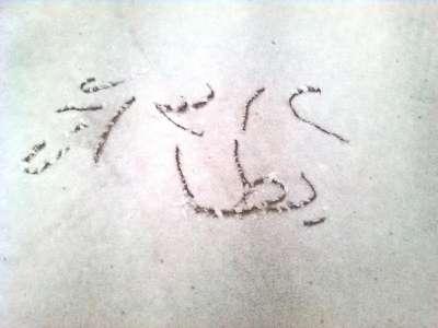فلسطين تكتسي بالثوب الأبيض 3909792639.jpg