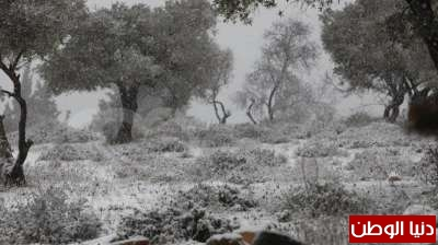 فلسطين تكتسي بالثوب الأبيض 3909792644.jpg