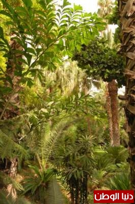 حديقة ماجوريل في مراكش تختزل نباتات القارات الخمس