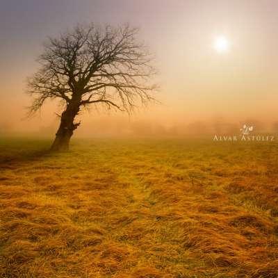 اللحظات الساحرة المصور الفنان أستوليز