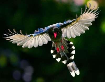 طيور نادرة