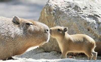 صور لمجموعة حيوانات جميلة 3909802590.jpg