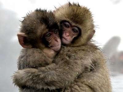 صور لمجموعة حيوانات جميلة 3909802596.jpg