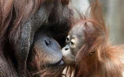 صور لمجموعة حيوانات جميلة 3909802608.jpg