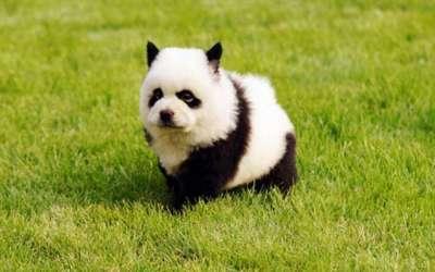 صور لمجموعة حيوانات جميلة 3909802611.jpg