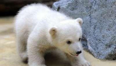 صور لمجموعة حيوانات جميلة 3909802614.jpg