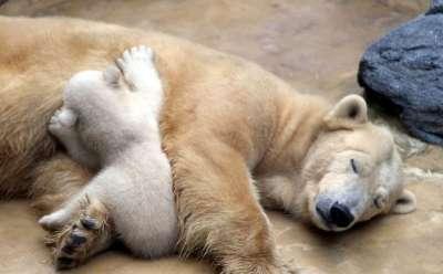 صور لمجموعة حيوانات جميلة 3909802615.jpg