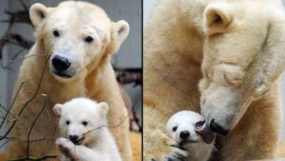صور لمجموعة حيوانات جميلة 3909802617.jpg