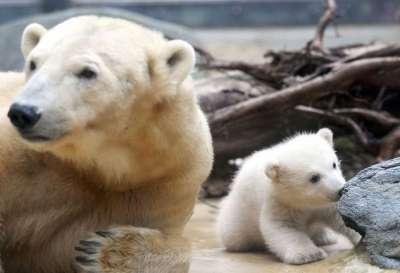 صور لمجموعة حيوانات جميلة 3909802618.jpg