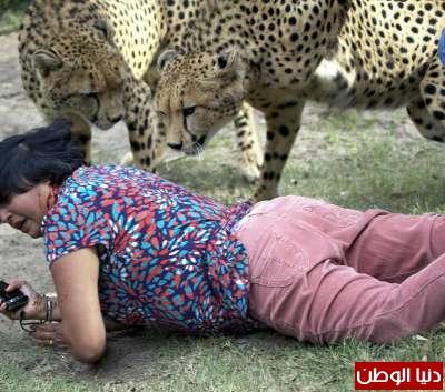 امرأة تنجو الموت دقائق أنياب