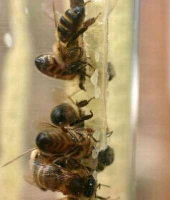 أنظر ماذا حبست مجموعة النحل داخل زجاجة