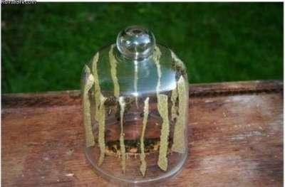 أنظر ماذا حدث بعد أن حبست مجموعة من النحل داخل زجاجة؟