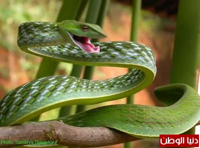 أجمل الثعابين حول العالم , في صور