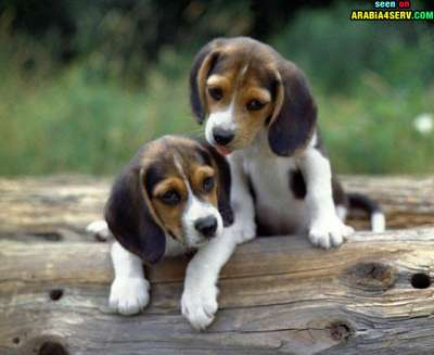 صور توأم الحيوانات 3909811943.jpg