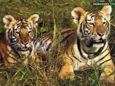 صور توأم الحيوانات 3909811944.jpg