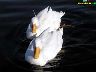 صور توأم الحيوانات 3909811945.jpg